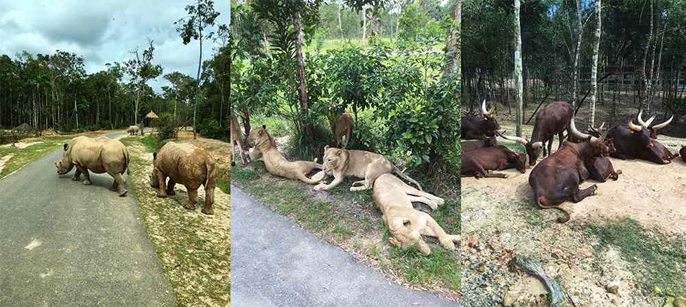 Các loài động vật hoang dã quý hiếm tại Vinpearl Safari Phú Quốc